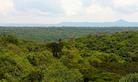 Maramagambo-Forest