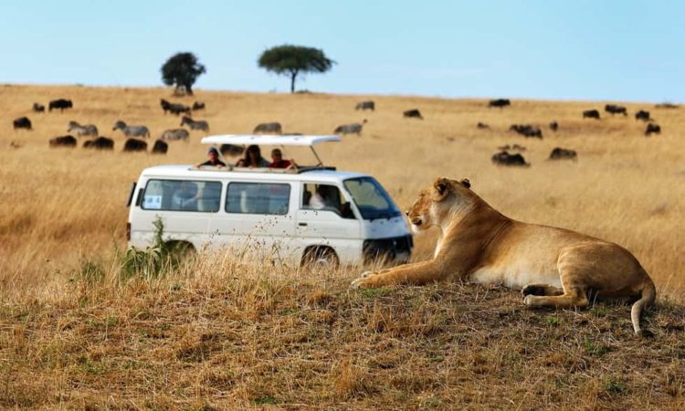 Budget Safari Tours - Queen Elizabeth National Park