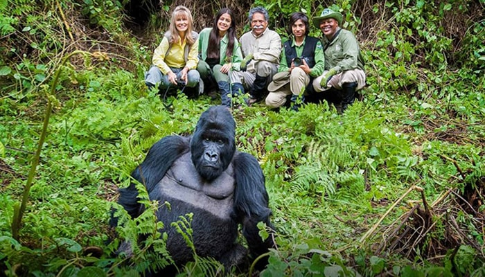 Best Time to Go Gorilla Trekking in Uganda